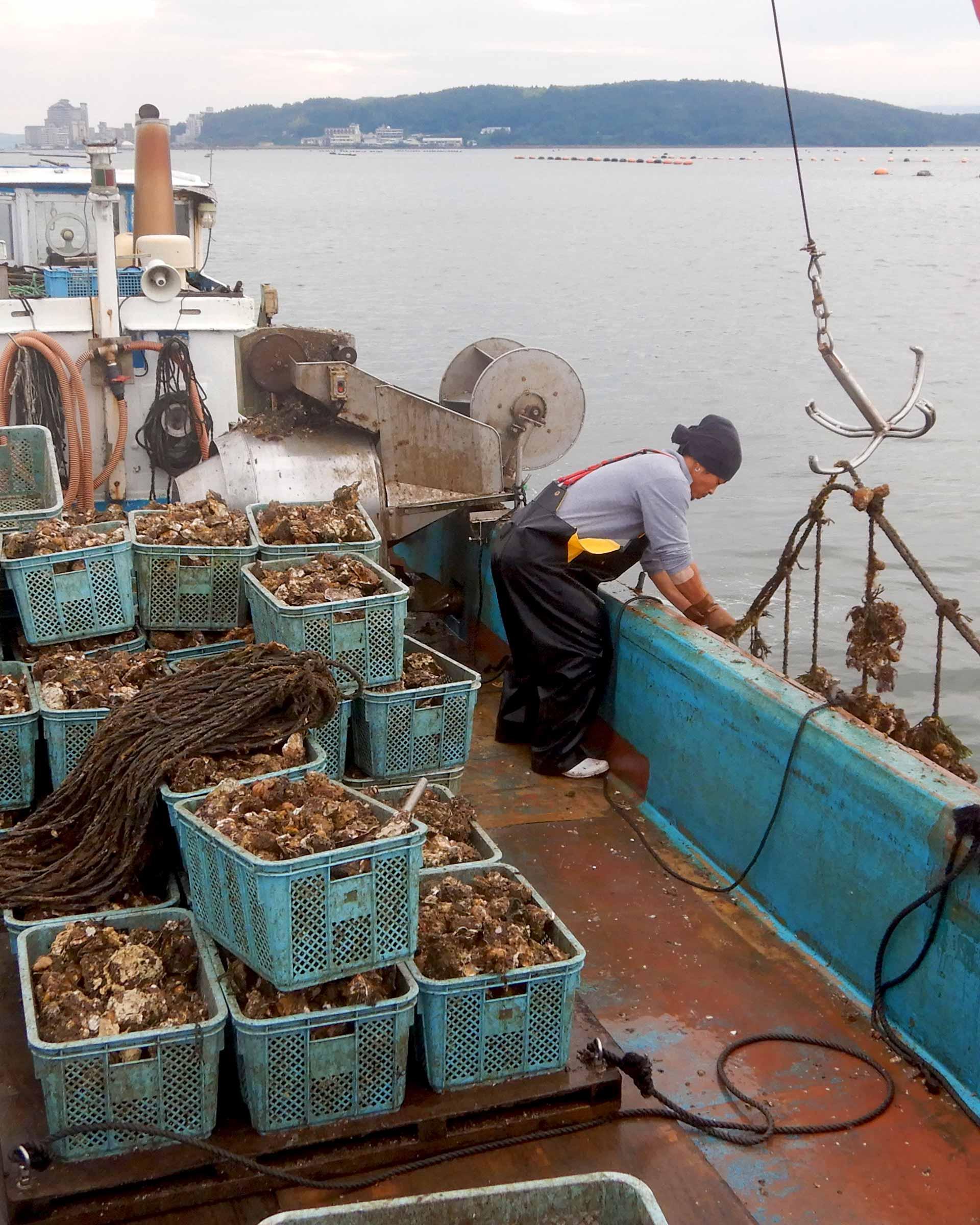 牡蠣の水揚げ